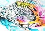 Piranha Skeleton watercolor by Art Jongkie