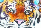 Tiger watercolor by Art Jongkie