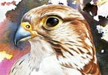 Eagle color painting by Ayman Arts