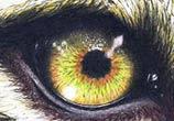Leopard eye drawing by Bajan Art