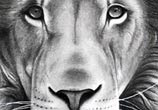 Lion 2 drawing by Bajan Art