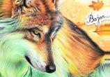 October Fox color drawing by Bajan Art