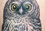 Owl 2 tattoo by Bambi Tattoo