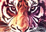 Eye of the Tiger oil painting by Ben Jeffery