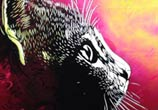 Abstract cat portrait by C215