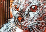Caturday by C215