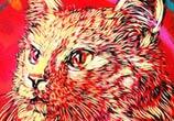Meow cat streetart by C215