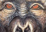 Ape color drawing by Dino Tomic
