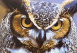Inverted Owl drawing by Dino Tomic