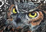 Owl drawing by DinoTomic