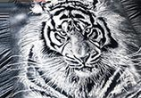 Salt Tiger drawing by Dino Tomic