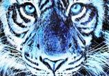 Tiger Splatter painting by Dino Tomic