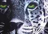 Jaguar with green eyes drawing by Garvel Art
