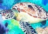 Green sea Turtle mixedmedia by Jonathan Knight Art