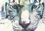 White Tiger painting by Jonathan Knight Art