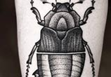 Beetle Insect Dotwork tattoo by Kamil Czapiga