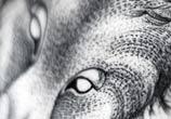 Fox dotwork tattoo by Kamil Czapiga