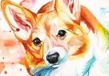Corgi color drawing by Katy Lipscomb Art