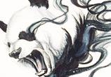 Disapearing panda drawing by Katy Lipscomb Art