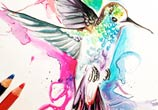 Hummingbird color drawing by Katy Lipscomb Art