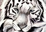 Ink Wash tiger drawing by Katy Lipscomb Art