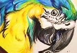Macaw color drawing by Katy Lipscomb Art