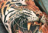 Furious TIger tattoo by Led Coult