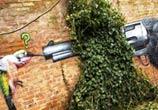 Birds ambush streetart by Lonac Art