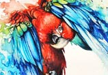 Parrot Watercolor by Louise Terrier
