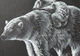 White Bear drawing by Louise Terrier