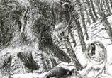 Bear wolves fight drawing by Lukas Lukero Art