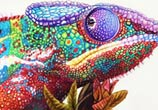 Chameleon drawing by Morgan Davidson