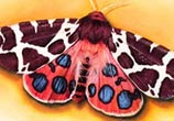 Moth studies drawing by Morgan Davidson