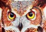 Owl pen drawing by Mostafa Mosad Khodeir