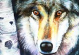 Canis Lupus watercolor painting by Peter Zuffa Bodliak