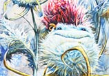 Thistle watercolor painting by Peter Zuffa Bodliak