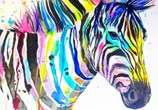 Rainbow zebra  by Pixie Cold