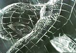 Spiderman by Roberto Vieira