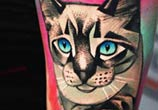 Color cat tattoo by Timur Lysenko