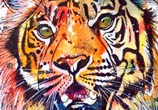 Next tiger painting by Tori Ratcliffe Art
