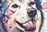 Siberian Husky watercolor painting by Tori Ratcliffe Art