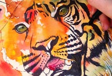 Tiger in progress watercolor painting by Tori Ratcliffe Art