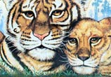 Streetart with the Tiger by Wild Drawing