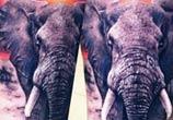 African elephant tattoo by Zsofia Belteczky